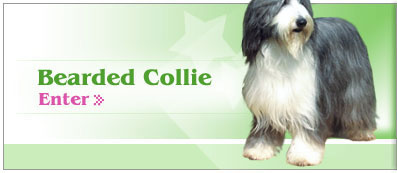 Enter Beared Collies