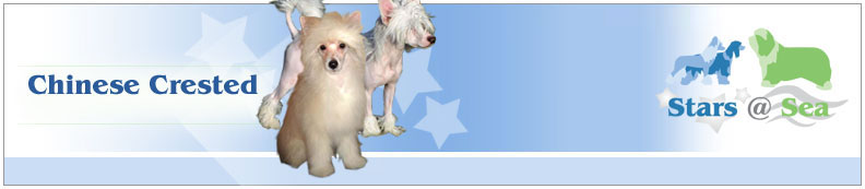 Stars at Sea - Chinese Crested
